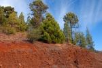 Красная земля и ярко-зеленые растения