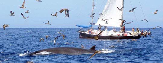 Дельфиний пролив
