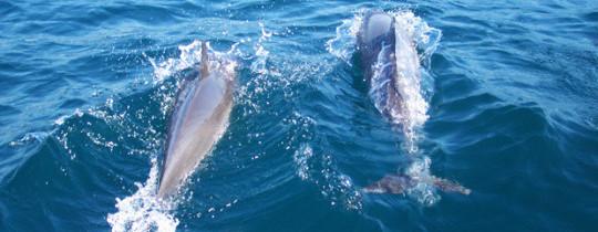 Delfines-Mallorca